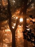 Forest fog 07
