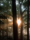 Forest fog 08
