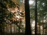 Forest fog 09