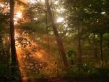 Forest fog 11