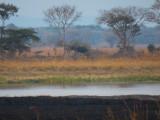 Elephant Across the River