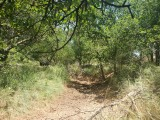 Dry Watercourse