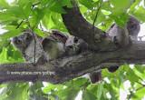 Four curious owls