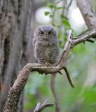 The Owl Kingdom