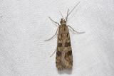 Nachtvlinders / Moths