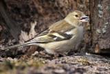 Bird Photography Hide