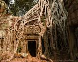 Doorway Amidst the Tree Roots