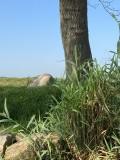 Kei bij de Jeneverboom