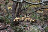 Autumn of Eastern Sierra