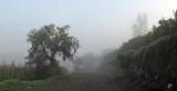 2020_01_29 Foggy Morning Walk