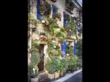 House of Flowers - Cogolin
