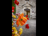 Poppies outside church