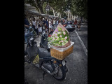 Pink Roses - St Tropez Market