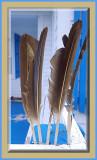 Looks Like Feathers