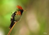 Souvenirs de voyage  -  Birds around the world