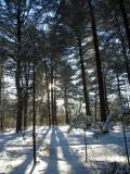 Parc écologique de l'Assomption