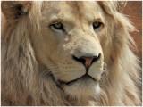 LionELM1.jpg