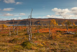 Finland: Nature