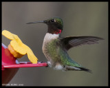 LOCAL  HUMMERS