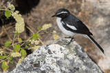 Angolan Cave Chat