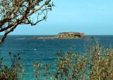 Wasp Island