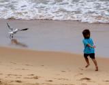 Seagull chaser