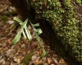 Small green bit of Tasmania