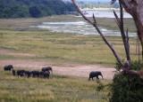 Elephants by the Chobe River, Botswana