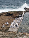 Seagulls prefer flat surfaces