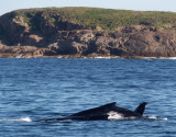 2019: Port Stephens Whale-watching