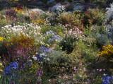 Perth Botanical Gardens