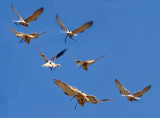 Seven views of a hovering raptor