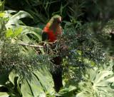Wildlife in Suburban Sydney