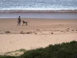Dog detail on a beach