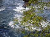Iguazu Falls – nearly