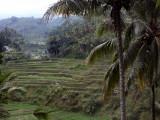 Rice terraces, Unde River