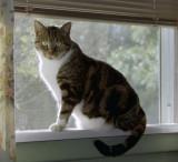 Second-best cat