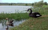 Swan & Goose, Pughs Lagoon