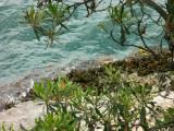 Vaucluse shoreline through banksias