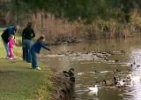 The duckfeeding ritual