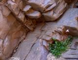 Small new plant, big old rocks