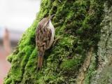 Vogels/Birds
