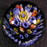 #57: Big Bloomer Size: 1.84 Price: $60