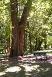 Minnie Ha Ha Park and the Meramec River
