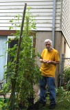 Monster Tomato Plants