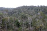 Forêt Iaroka