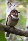Les Oiseaux du Madagascar