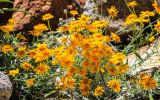 Blooming wildflowers in the Hetch Hetchy Valley of Yosemite NP
