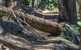 Taft Point Trail blocked by a fallen tree in Yosemite National Park