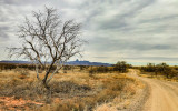 Along the Pronghorn Loop Road with Baboquivari Peak in the distance in Buenos Aires NWR